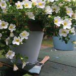 Blumentopf streichen - No. 9