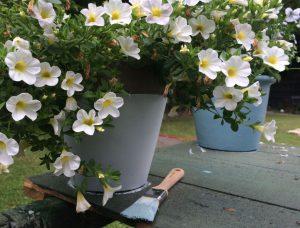 DIY - Blumentoepfe streichen_7_fundwerke_072016
